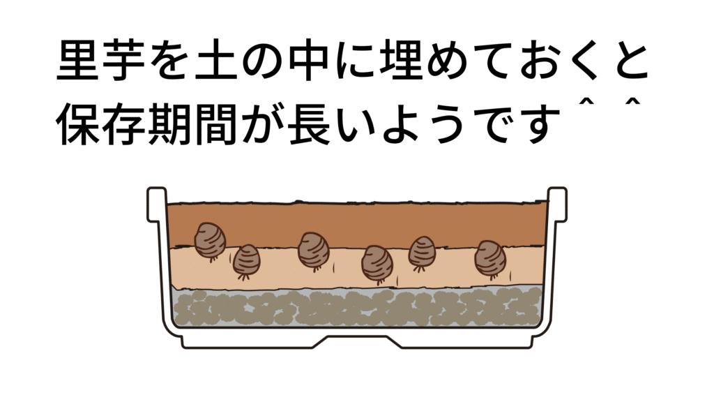 里芋を土の中に埋めておくと 保存期間が長いようです